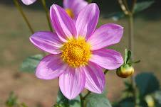 Flower in the Safdarjung garden