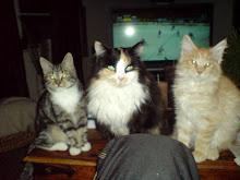 Tre av mina kärlekar..
