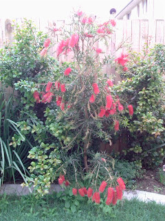 Cvetoči grmiček na najinem vrtu