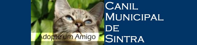 Canil Municipal de Sintra/Gatos