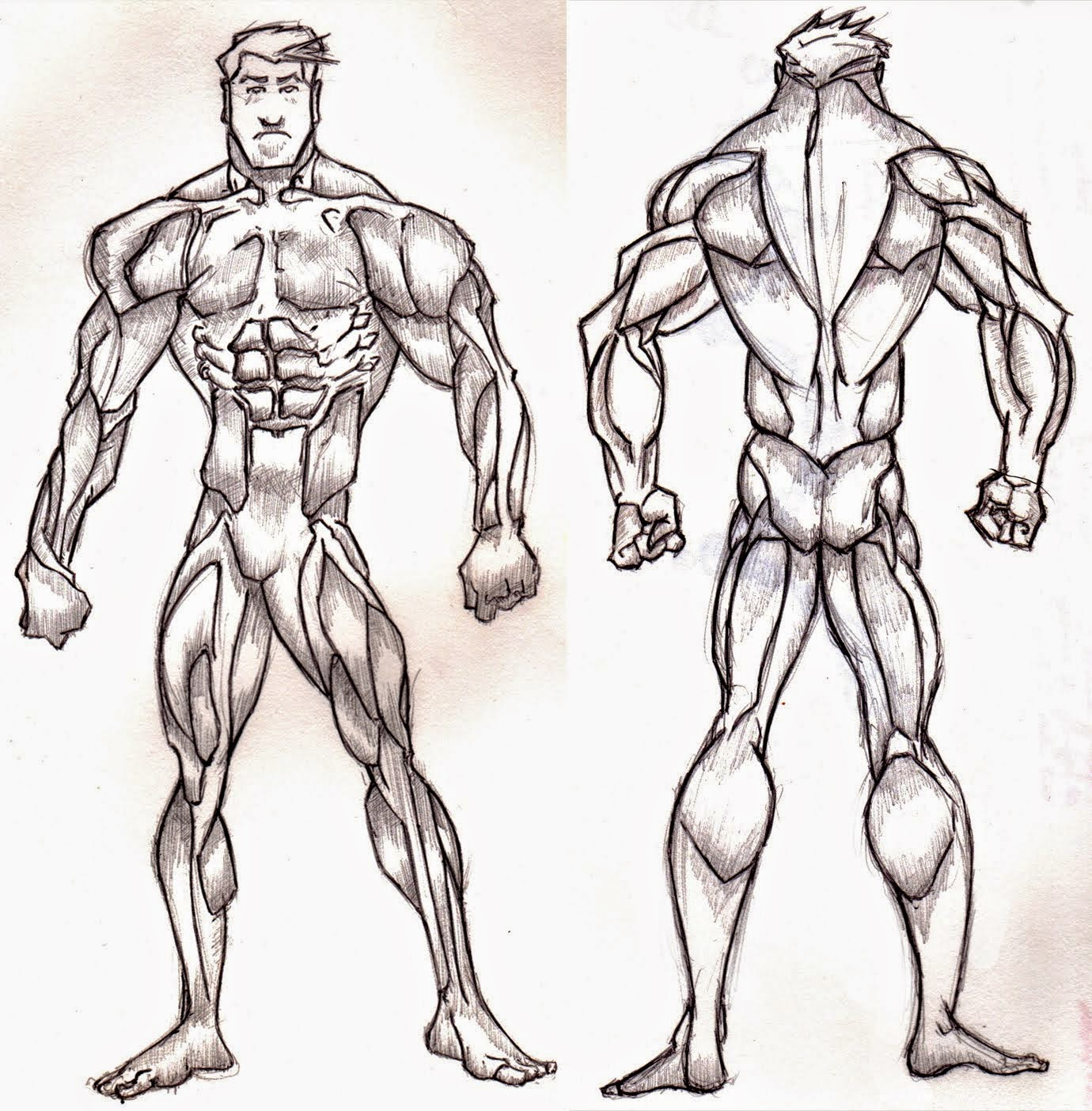 Hamo\'s Art Blog: Muscle Study