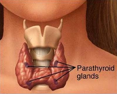 opération nodule thyroïde