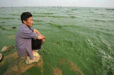 Lago Chaolu, 5º maior da China, invadido por algas