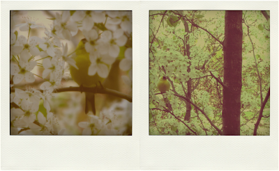 birds, Detroit, Nature, Spring, Poems, John Keats, I stood tip-toe upon a little hill, goldfinch