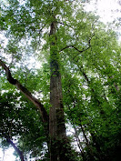 dreamtree....
