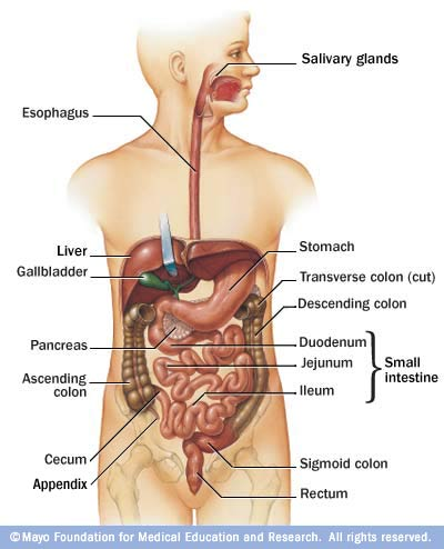 your colon and you, Human body
