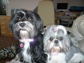 Daisy & Millie