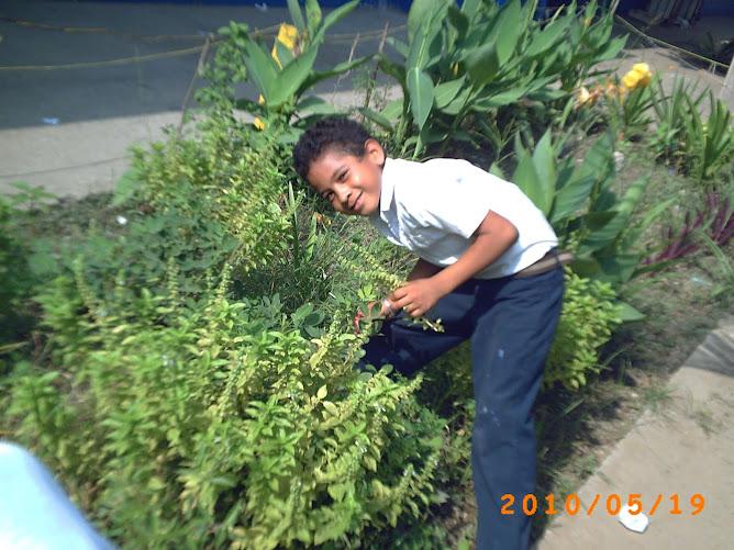 Luis obteniendo semillas de albahaca