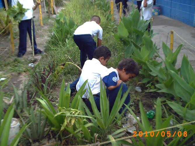 """Estudiantes de tercero """"D"""" eliminando la vegetación espontánea de su huerto"""