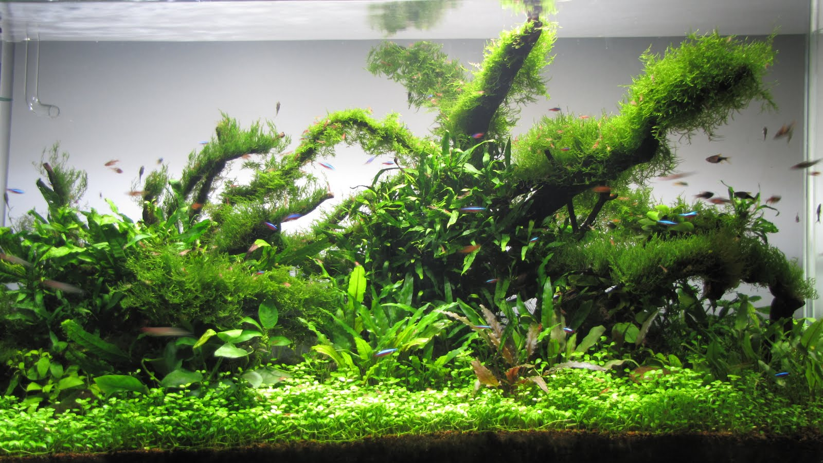 Affable aquarium my landscapes Aquarium landscape