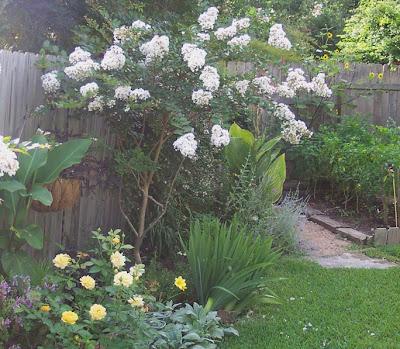The Transplantable Rose: July 2007