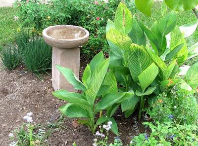 Annieinaustin,front garden