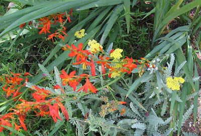 Annieinaustin, crocosmia and yarrow