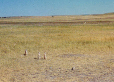 Annieinaustin, Badlands prairie dog village