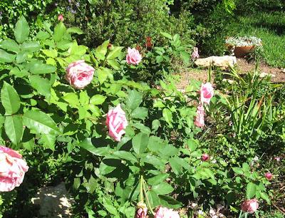 Annieinaustin,Pink Entrance garden
