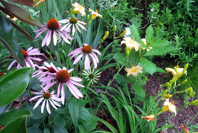 Annieinaustin, daylilies and coneflowers