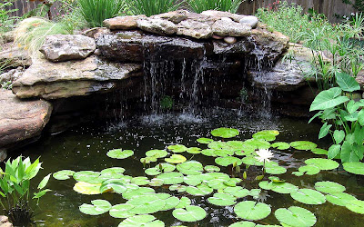 Annieinaustin, pond 2, lilies & rocks