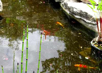 Annieinaustin, pond 7 fish & dragonfly