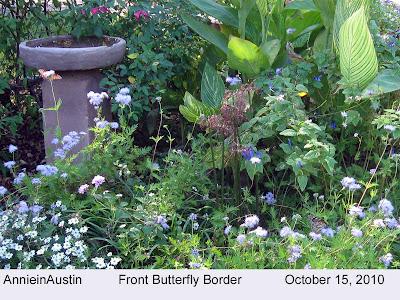 Annieinaustin, front butterfly border w greggs mistflower