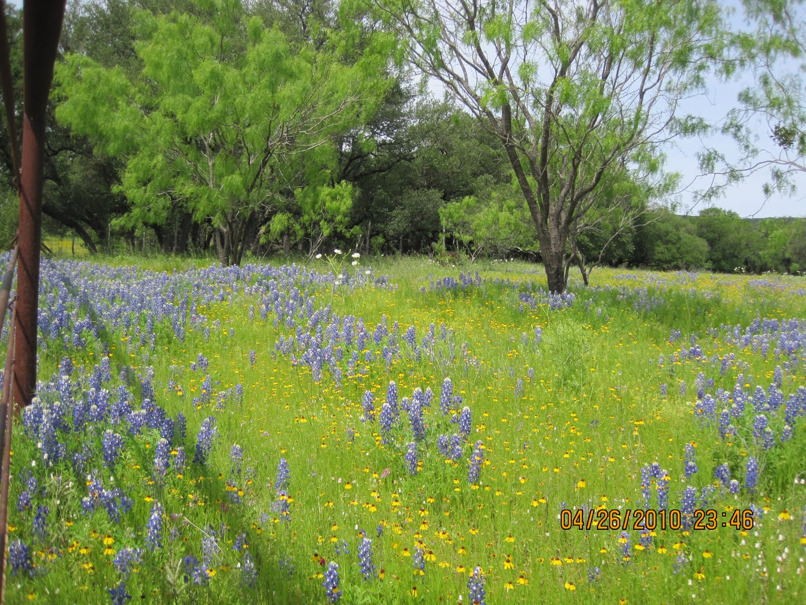 Texas Hill Country Spring 2010 Texas Hill Country Wild Flowers