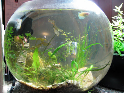 Mini aquariums 2 gallon tank profile betta tank for 2 gallon betta fish tank
