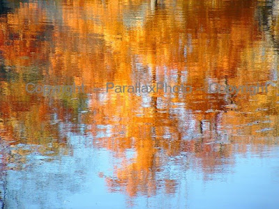 abstract orange blue fall leaves water reflection