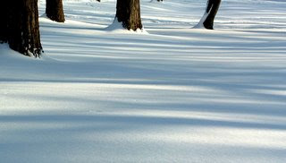 light and blue shadows on snow, tree truncks