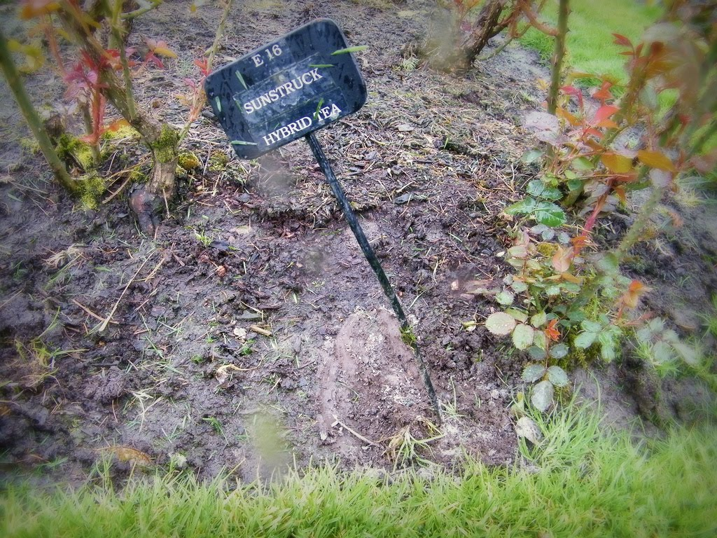 28 are ashes good for a garden home www darwencemetery org