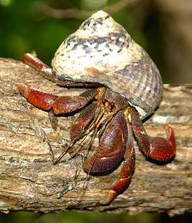 how to keep hermit crabs humid