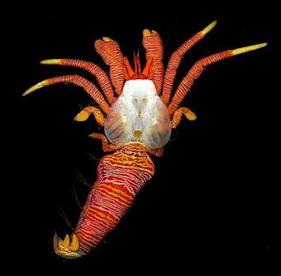 amazing crab