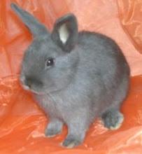 Eine typische Kaninchen-Kleinanzeige