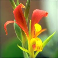 Chumphon Flower