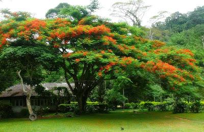 Klong Phrao Park