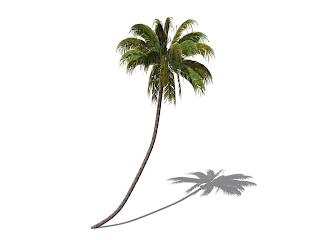 coconut tree essay illustrator coconut tree vector vector antwl college application essay format example immigration