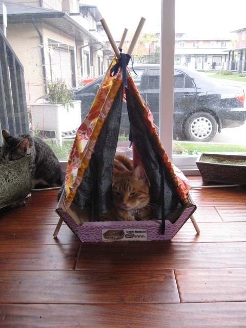 Indoor Tents... for CATS! & luckybydesign: Indoor Tents... for CATS!