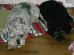Lazy dogs!