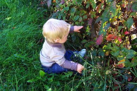 Hagamos de colombia un jardin para los ni os hagamos de for Jardines pequenos para ninos