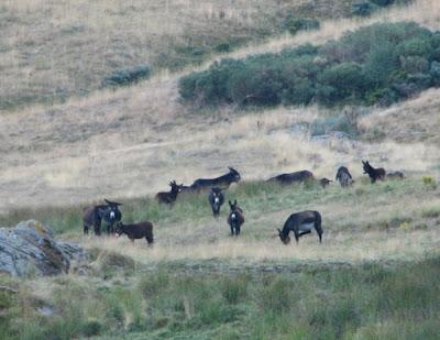 Alto sil las monta as y sus pueblos el valle de vivero for Viveros en zamora