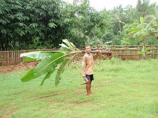 Indonesia not yet truly asia spostare un albero di banane for Albero di banane