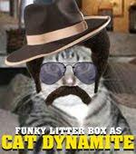 Cat Dynamite