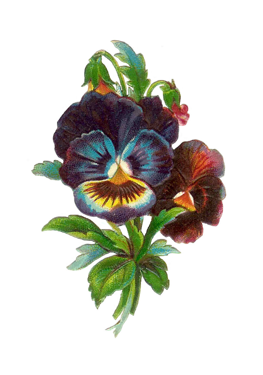 antique images free flower clip art antique pansy die Black and White Pansy Clip Art pansy clip art