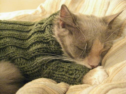 Knitting Pattern Cat Clothes : the cute stuff: cats in sweaters