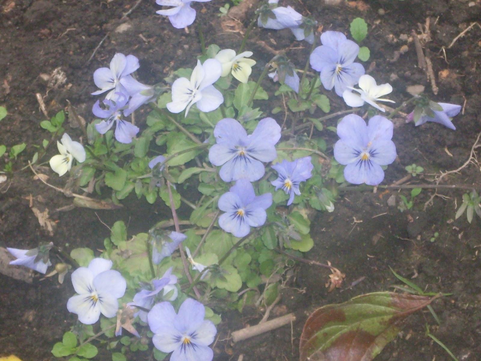 Plantas ornamentales plantas ornamentales for 4 plantas ornamentales
