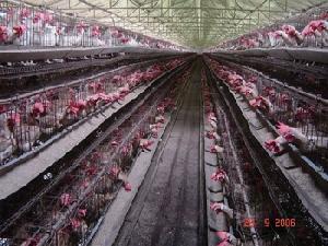 poultry hatcheries