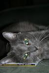 Ella Kitty