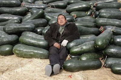 funny sleeping pics