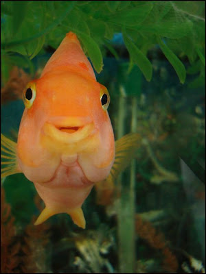 fish with face