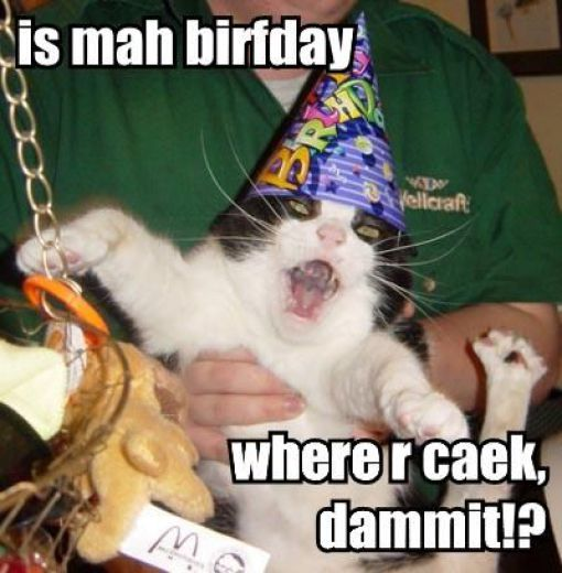 How Cats celebrates their Birthday - 28 PicsFunny Happy Birthday Kitten