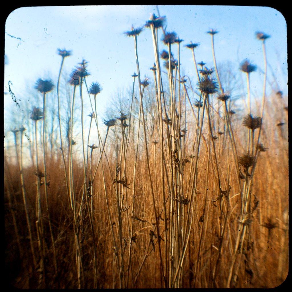 [weeds.jpg]
