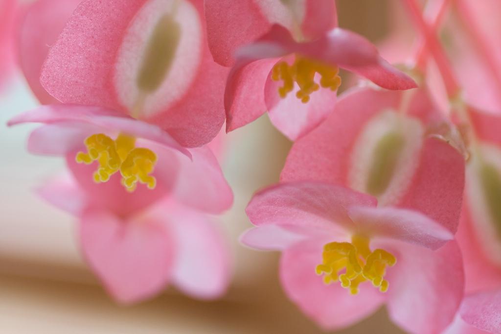 [pinks.jpg]